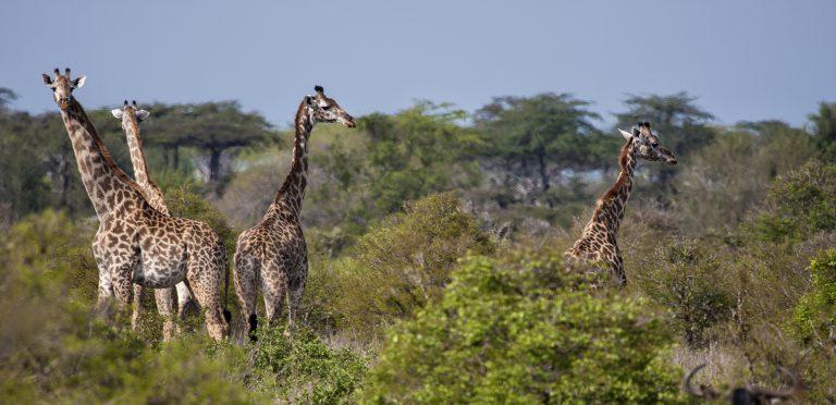 Tanzania. P.N. Saadani