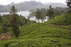 Sri Lanka viajar seguro después de Covid19